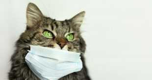 Коронавирус у кошек